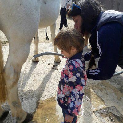 Cuidado a nuestro caballo: versión ducha